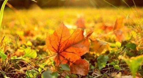 Прогноз погоди в Україні на 9 листопада
