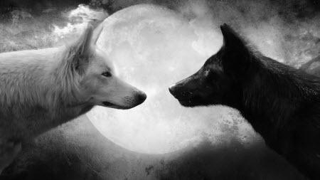 """Притча """"Два вовки. Або який вовк живе в тобі?"""""""