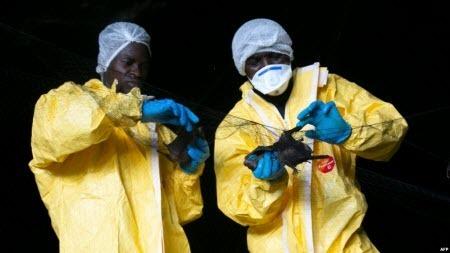 В Африці знову виявили вірус Ебола, - ВООЗ