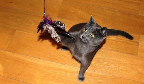Как удержать кошек от убийств