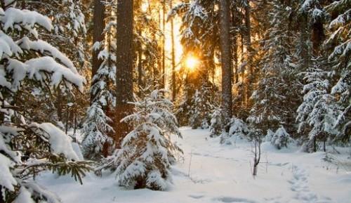 Прогноз погоди в Україні на 15 лютого 2021 року