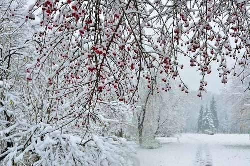 Прогноз погоди в Україні на 17 лютого 2021 року