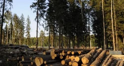 """Планомерная вырубка лесов поможет """"охладить"""" планету"""