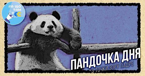 """Пандочка дня"""