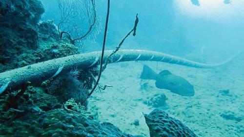 Морское дно, новый театр войны