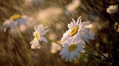 Прогноз погоди в Україні на 11 червня 2021 року