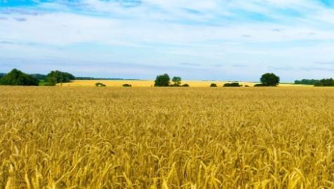 Прогноз погоди в Україні на 1 серпня 2021 року